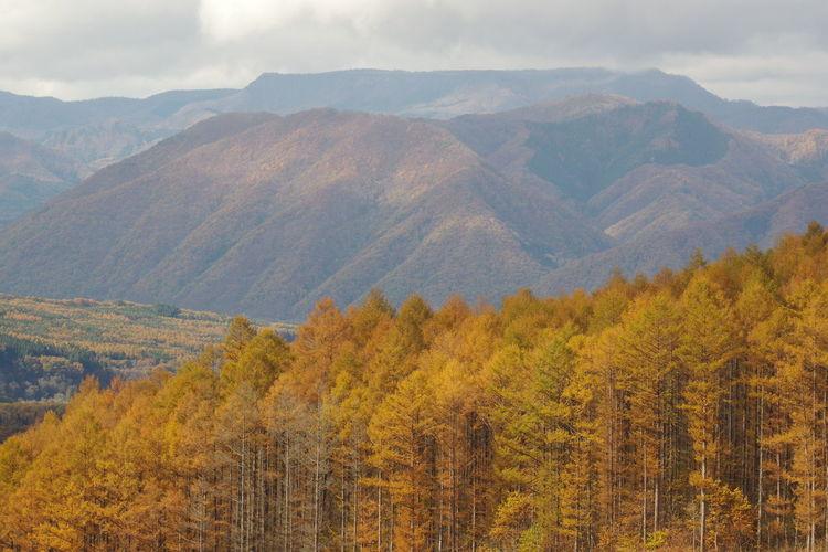 観音沼森林公園 山の風景 紅葉