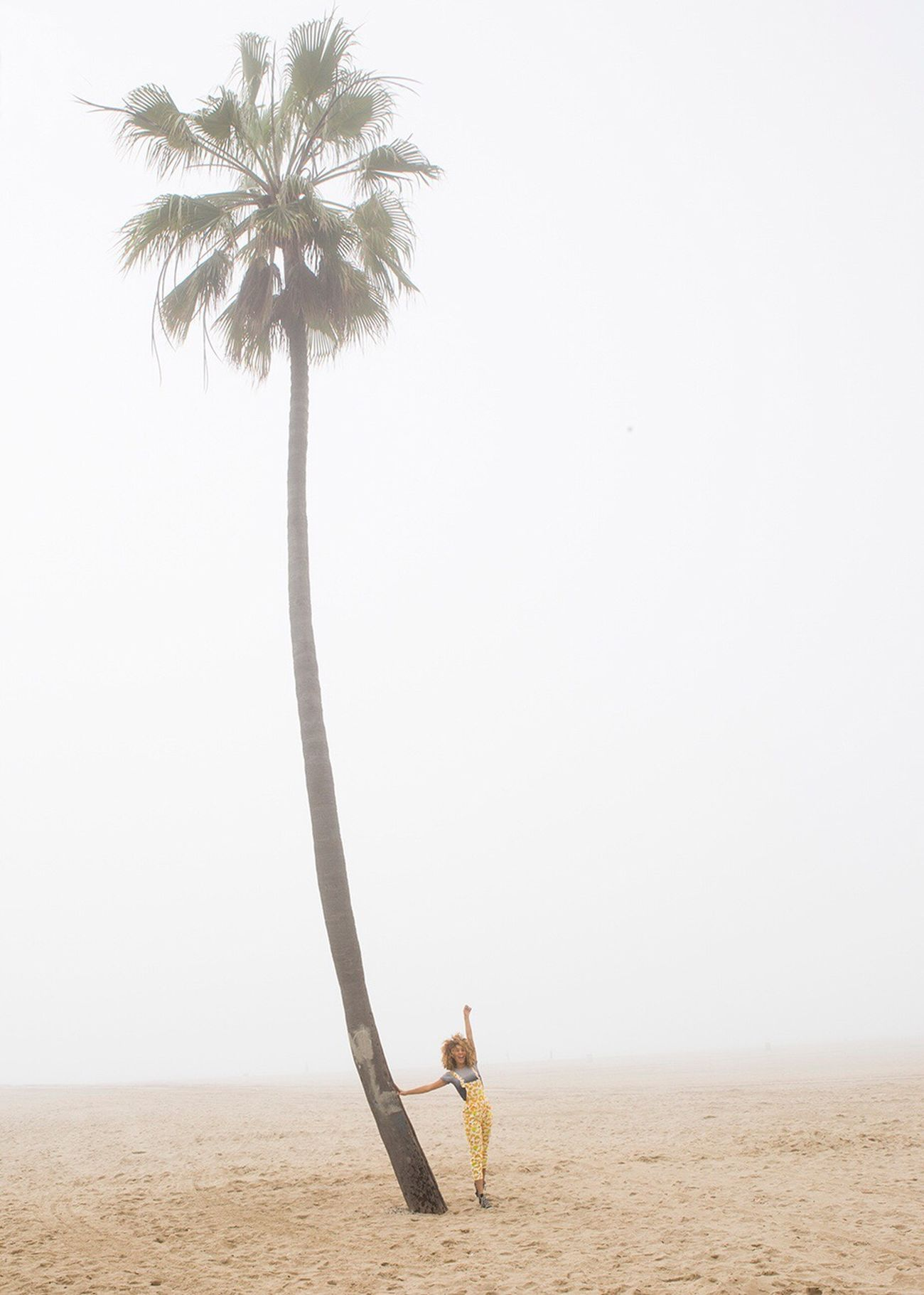 sand, beach, palm tree, one person, day