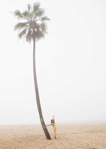 Palm Palm Tree Girl Beach California Minimalism Foggy California Dreamin