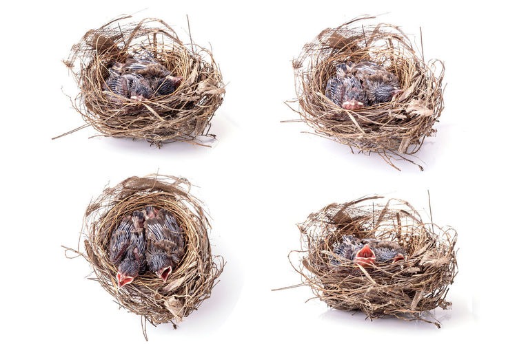 Close-up of dry nest against white background