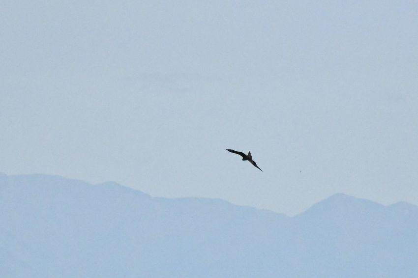 Sky Mountain Animal Themes Flying Bird Animal Vertebrate