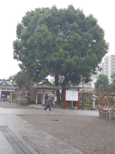 Japan Tokyo Kameido Kameido Tenjin Streetphotography Rain Rainy Days Jinja 亀戸天神 Haze けぶり日。