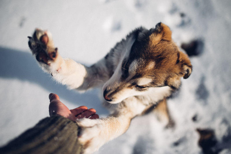 Alaskan Malamute Animal Themes Animals Best Friends Day Dog Love Domestic Animals Friends Friendship Fun Holding Human Body Part Human Hand Human Representation Husky Lifestyles Mammal Nature Outdoors Pet Pets Real People Snow Togetherness Winter Pet Portraits