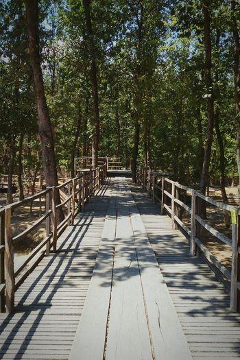 Forest Forestwalk Bulgaria Landscape Path Pathway