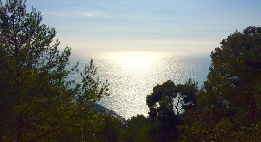 La Méditerranée Water Tree Nature Beauty In Nature Sea No People Scenics Tranquil Scene Sky Horizon Over Water Outdoors Day Foreground