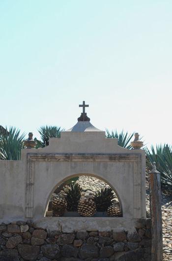 Agave field - San Sebastian de Oeste, Mexico Agave Agave Fields Agave Plant Clear Sky Cross Cross Farm Mexico No People Outdoors Religion San Sebastian De Oeste Sky Tourism Travel First Eyeem Photo