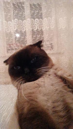 Cat First Eyeem Photo
