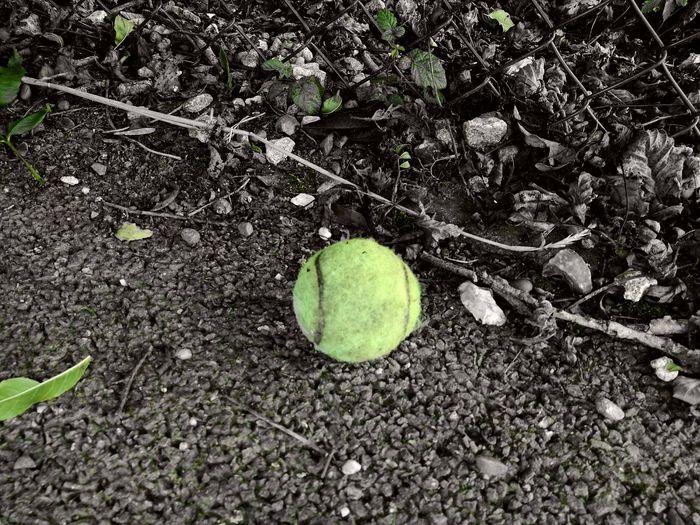 The Color Of Sport Tennis Ball Tennis 🎾 Ball Tennislover❤