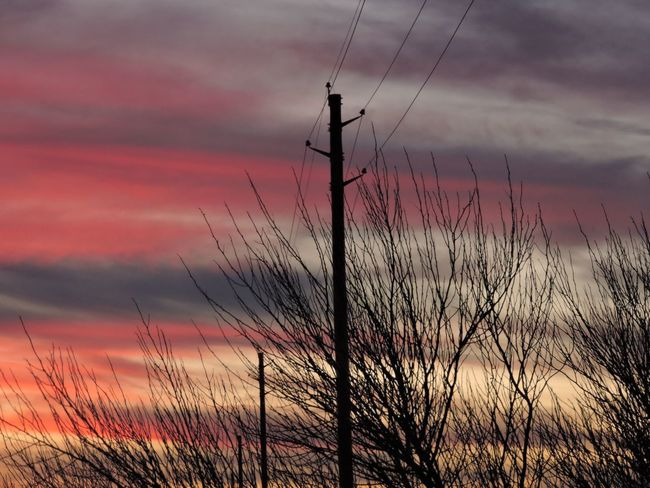 Telephone and trees admist the sunset Sunset Sky No People Nature Cloud - Sky Outdoors Beauty In Nature Tree Day