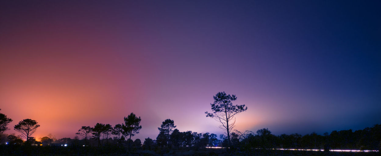 Silhouette trees against clear sky at sunset