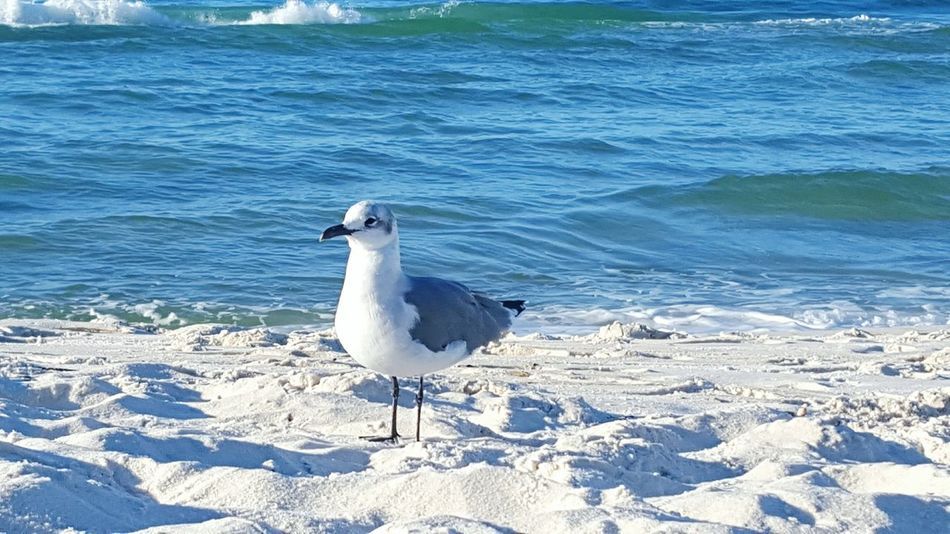 Bird Water One Animal Beach Day Outdoors Beauty In Nature Sea Nature Ocean Bird