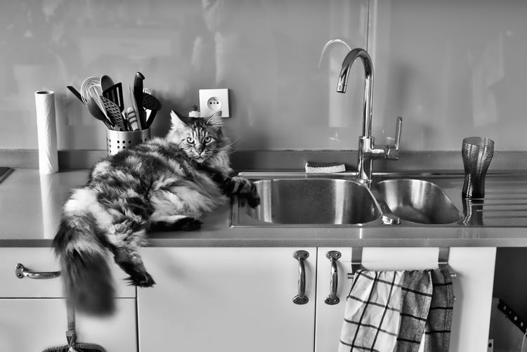 Cat lying on counter in kitchen
