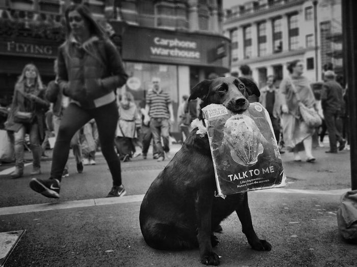 I'm just a friend you haven't met yet Dogs London Architecture City Women Building Exterior People