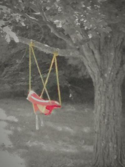 A Child's Swing EyeEm EyeEm Gallery Tree Swing Forlorn Hanging From Trees Ghost Swing EyeEm Decaying In My Backyard Getty X EyeEm Smartphone Photography