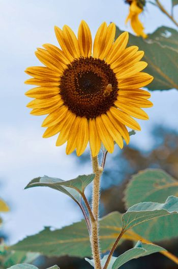 Sunflower Sunflowers Sunflowers🌻 Flower Garden Flowerporn Nature Beauty In Nature Flowers,Plants & Garden Garden Flowers Flower Collection Summer Yellow Color Plant Rural Landscape Flower Head Flower Yellow Defocused Sunflower Rural Scene Leaf Petal Blue Uncultivated Stamen In Bloom Pollen Plant Life Botany Blossom Flowering Plant