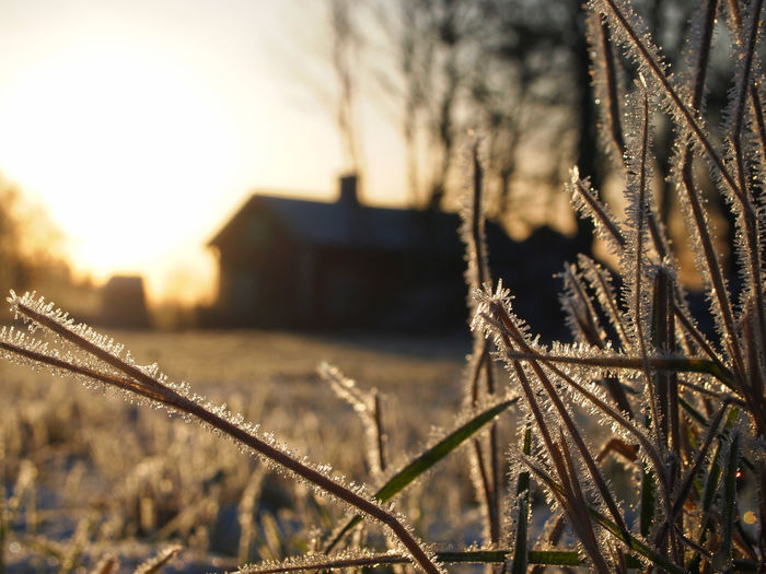 Atumn Colors Autumn Freshness Frost Grass Low Angle View Architecture Building Exterior Built Structure Close-up Cold Temperature Day Focus On Foreground Nature No People Outdoors Sky Winter