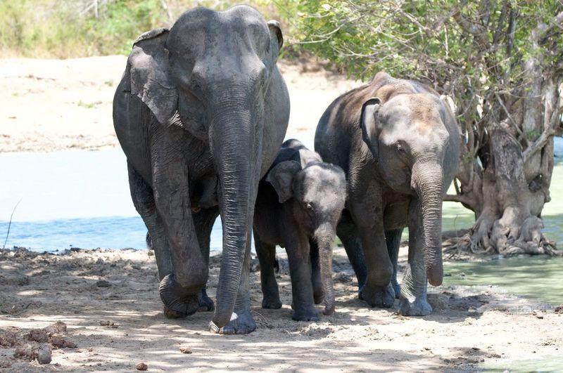 Elephant. Family. National park. Sri Lanka. 12500010 The Great Outdoors - 2017 EyeEm Awards