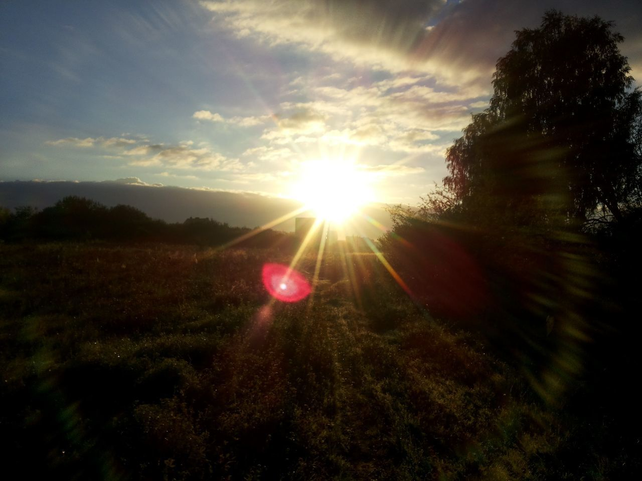 sun, nature, sunbeam, sunset, beauty in nature, sunlight, tree, growth, scenics, tranquility, outdoors, no people, landscape, sky, day