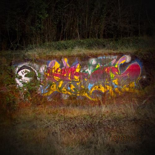 Here Belongs To Me Graffiti Wall Wall - Building Feature Graffiti Art Graffiti Wall Art Creativity Nature Trees Twigs Twigs And Branches Saturation Saturated Colours Bright Colourful Vivid Colours  Bushes