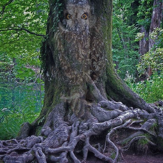 Forest Foresta Green Gufo Hide And Seek No People Outdoors Owl Peekaboo Radici Roots Roots Of Imagination Textured  Tree Trunk Tronco Verde