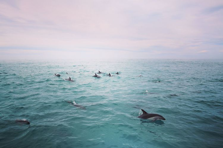 Dolphins swimming in sea against cloudy sky