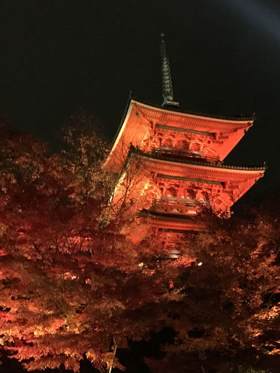 KiyomizuTemple Light Up Red Architecture Fall Leaves Kyoto Japan Night No People