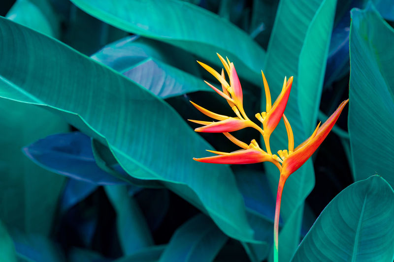 Flower Innovative Design Backgrounds Beauty In Nature Bird Of Paradise - Plant Close-up Colorful Flowers Day Flower Flower Head Flowering Plant Focus On Foreground Fragility Freshness Green Color Growth Inflorescence Innovative Leaf Nature Petal Plant Plant Part Tropical Leaves Vulnerability