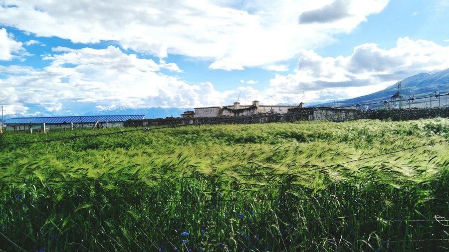Rural Scene Agriculture Water Irrigation Equipment Field Farm Sky Grass Cloud - Sky