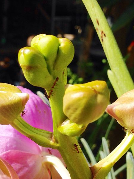 Ant Photography Orchid Flower Nature Beauty In Nature 😊🌸