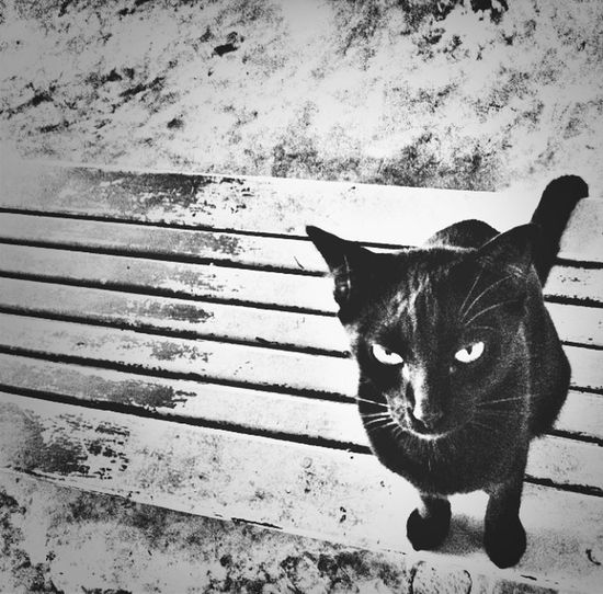 My cute cat! Hahaha Pets Blackandwhite