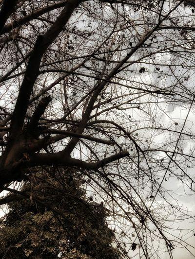 Hauntedtree Horror Photography Tree And Sky