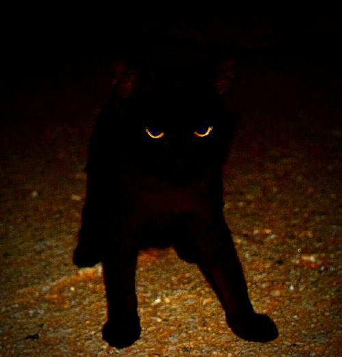 Taking Photos Cat Evil Cat Agia Marina