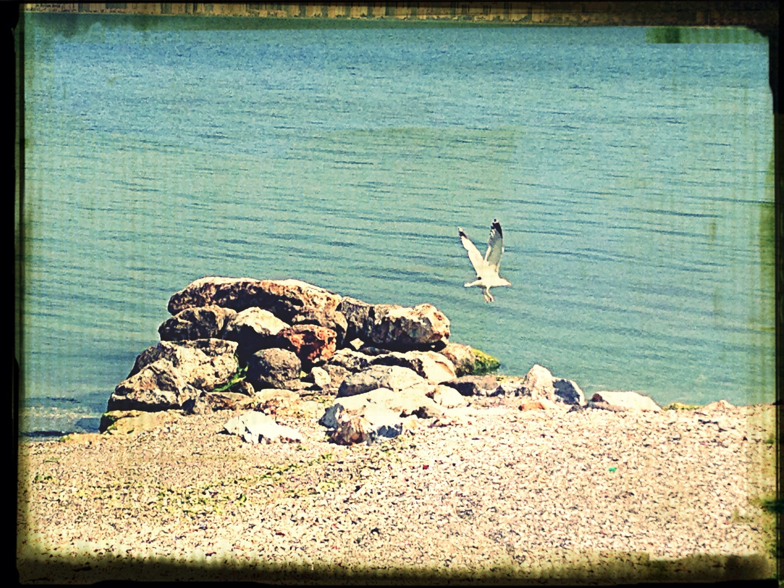 transfer print, auto post production filter, bird, water, sea, wildlife, animal themes, animals in the wild, rock - object, nature, seagull, beach, rock, tranquility, flying, tranquil scene, shore, blue, scenics, beauty in nature