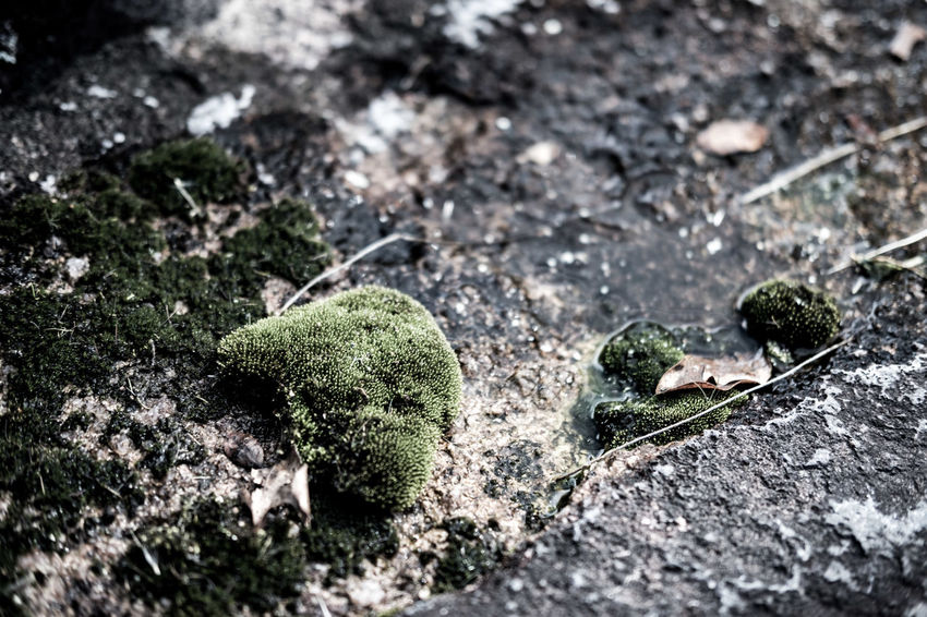 Animal Themes Close-up Day Fragility Freshness Green Color Growth Moss Nature No People Outdoors Selective Focus