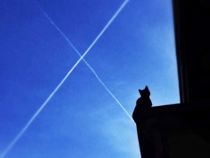 Black Cat Azul Blue Sky Chemtrails Azure Sky