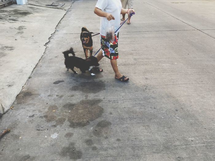 Low section of man walking with dogs