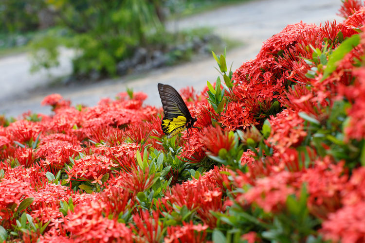 Butterfly pollinating on red flower
