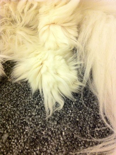 Super cute and fluffy paws/legs