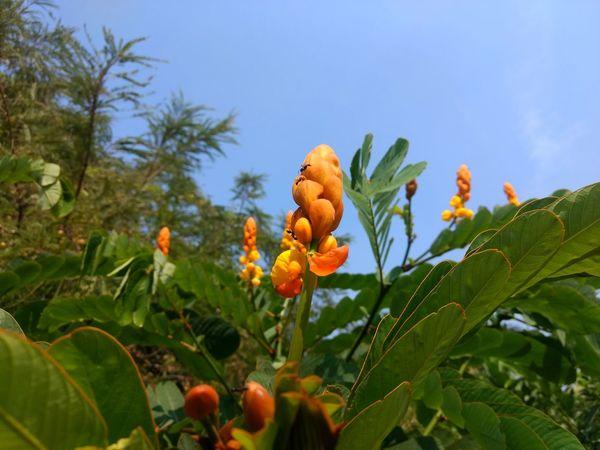 EyeEmNewHere Flower Flower Head Tree Fruit Leaf Sky Close-up Plant