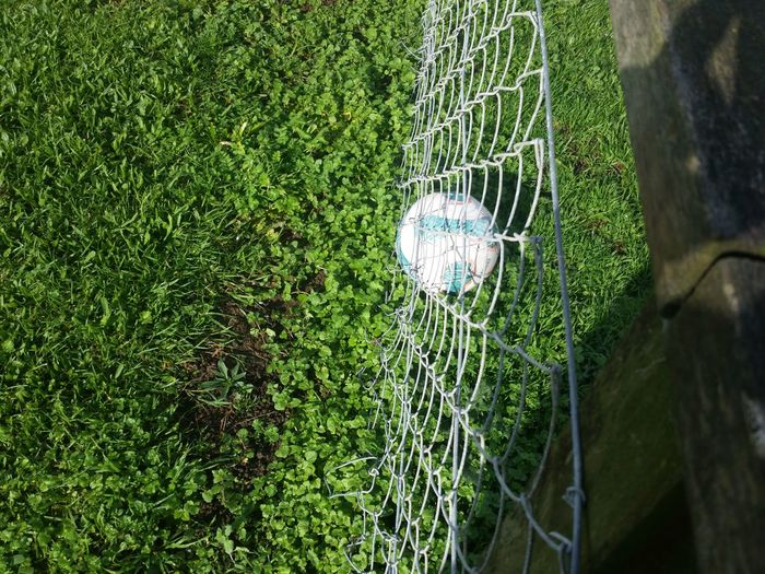 Ball in the fence Hanging Out Garden Decor Landscapes Beauty In Nature Skill  Travel Destinations Bad Manors Ltd Kaiaua NZ Freshness Ball Fenceposts Enjoyment Stuck Together No People Around Beautiful Nature Outdoors