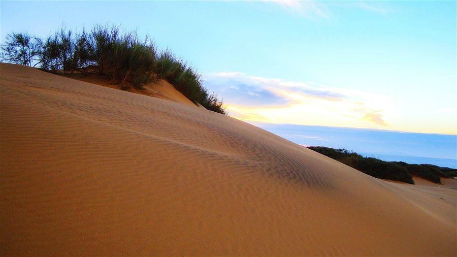 Deserts Around The World Desert Beauty Desert Sunset Desert Plants Dunes
