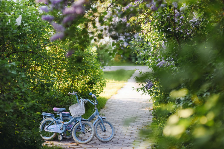 Kid bicycles Children Kids Wheel Activity Bicycle Bike Bikes Child Childhood Children Playing Flower Game Growth Kid Kid Bicycle Land Vehicle Leisure Activity Mode Of Transportation No People Outdoors Selective Focus Sport Transportation Tree