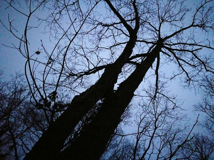 Tree Low Angle View Nature Branch Bare Tree Sky Tranquility Outdoors No People Beauty In Nature Silhouette Day