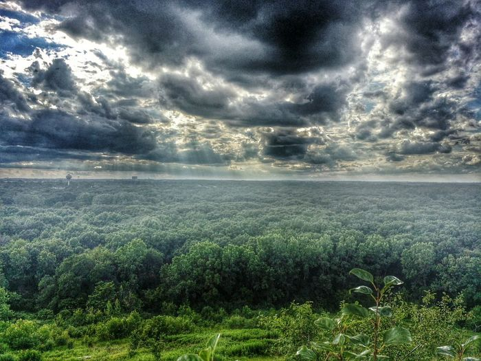 Forest Trees And Sky Sky Sky And Clouds Ominous Sky Taking Photos Enjoying Life Eyeem Photo