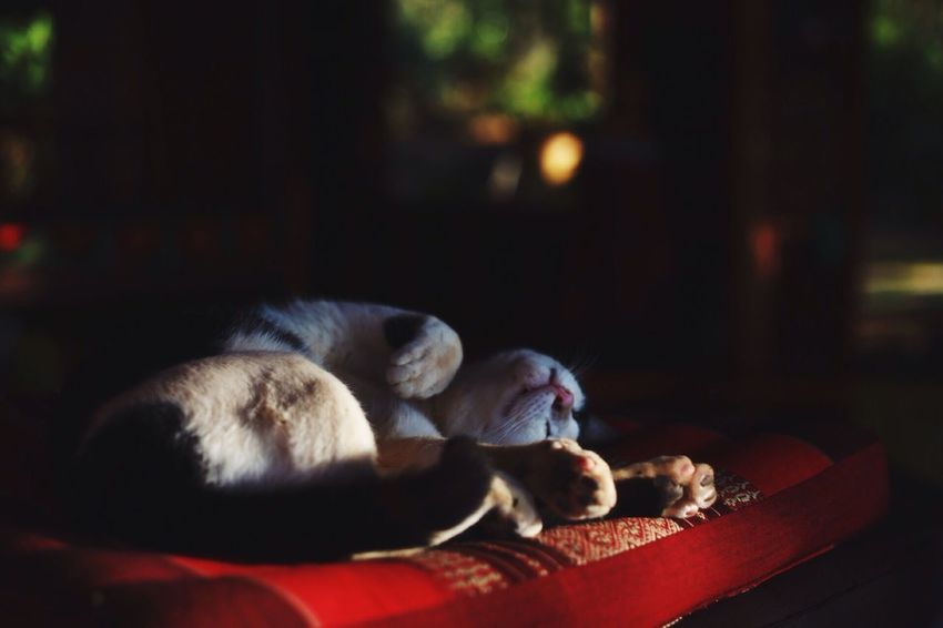 Cat Slow Life Cat Photography Pets Light And Shadow Light Cat Sleeping EyeEmNewHere