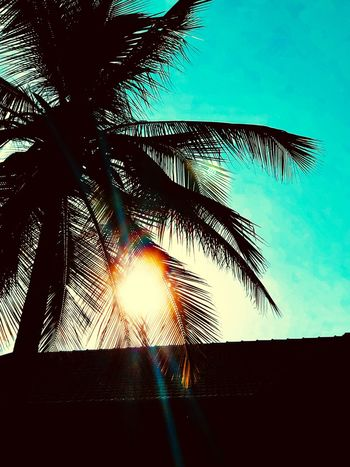Palm Tree Low Angle View Tree Silhouette Sunlight Nature Palm Frond