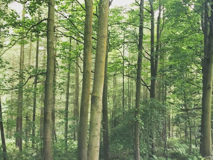 Outdoors Full Frame Beauty In Nature Yorkshire Dales Tree Forest Nature Beauty In Nature Tranquility Tranquil Scene Day Tree Trunk No People Green Color Scenics Growth Low Angle View Bamboo Grove Branch