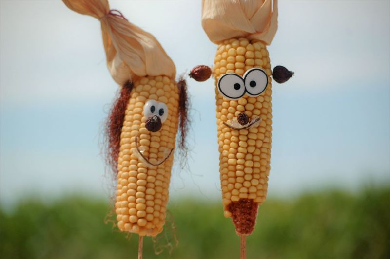 Agriculture Animal Close-up Corn Corn On The Cob Creativity Day Focus On Foreground Food Food And Drink Freshness Healthy Eating Majs Nature No People Outdoors Representation Sweetcorn Toy Vegetable Wellbeing