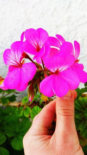 Flower Present