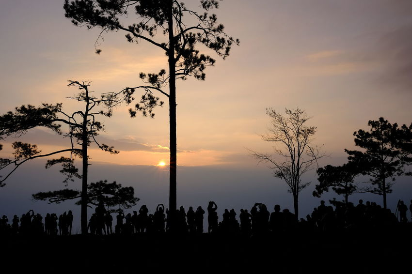 Beauty In Nature Branch Cloud - Sky Day Growth Landscape Large Group Of People Men Nature Orange Color Outdoors Palm Tree People Real People Scenics Silhouette Sky Sunset Togetherness Tranquil Scene Tranquility Tree Tree Trunk